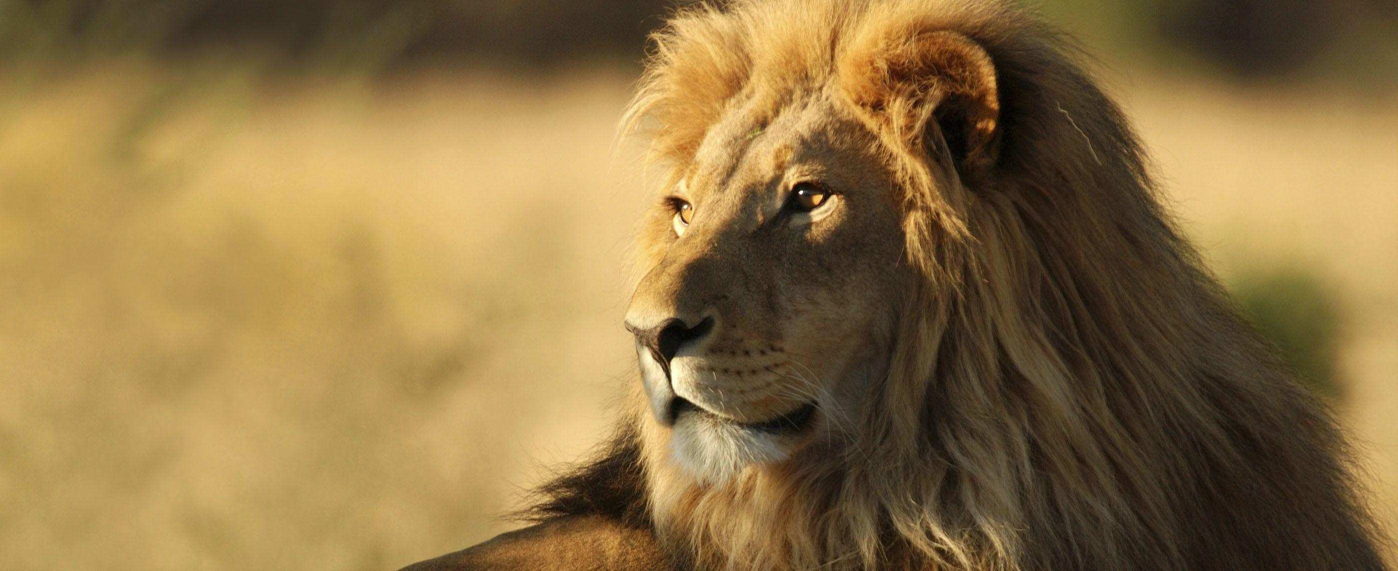 cabarceno-leon